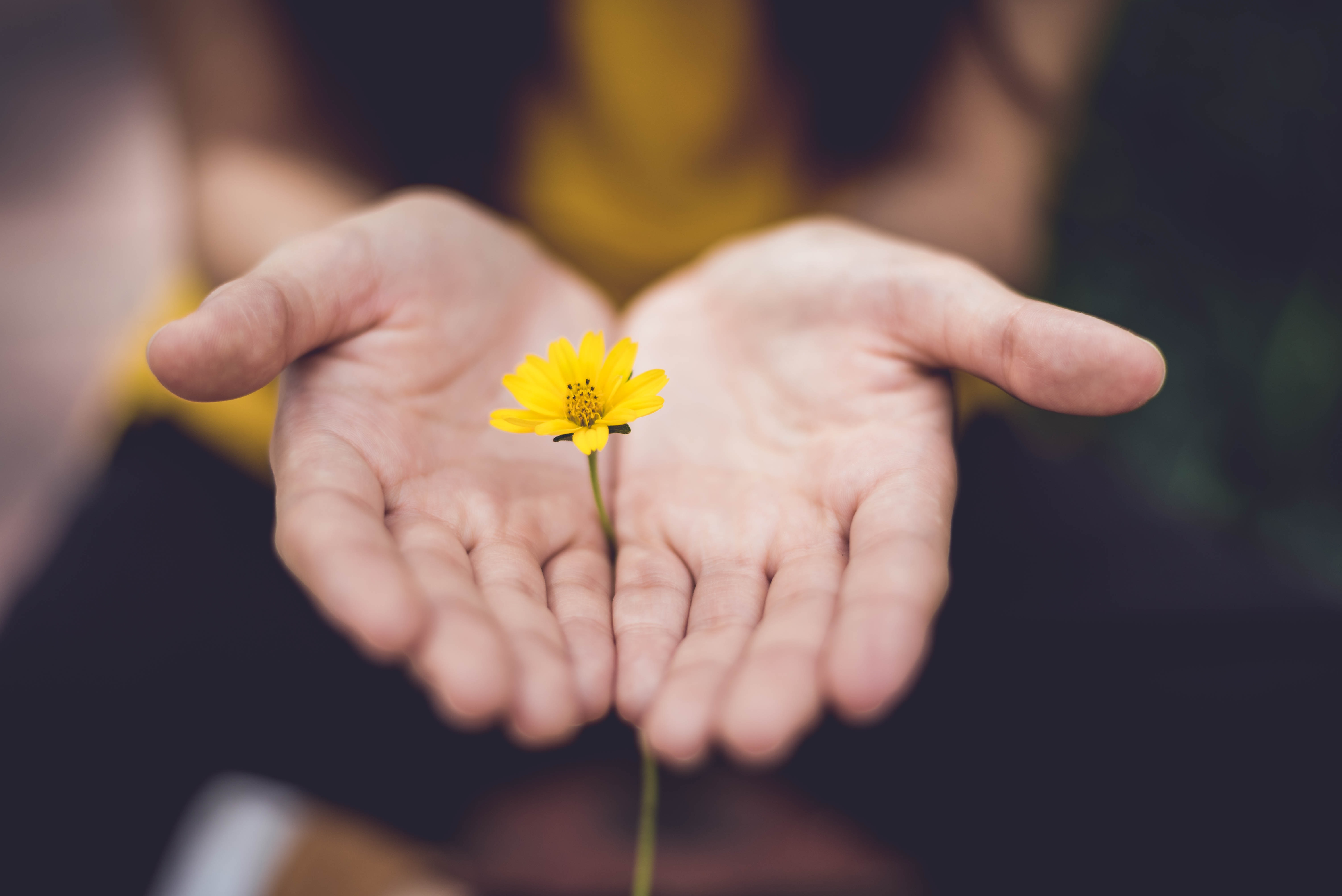 Gratitude – The Power of Appreciation, By Sneha